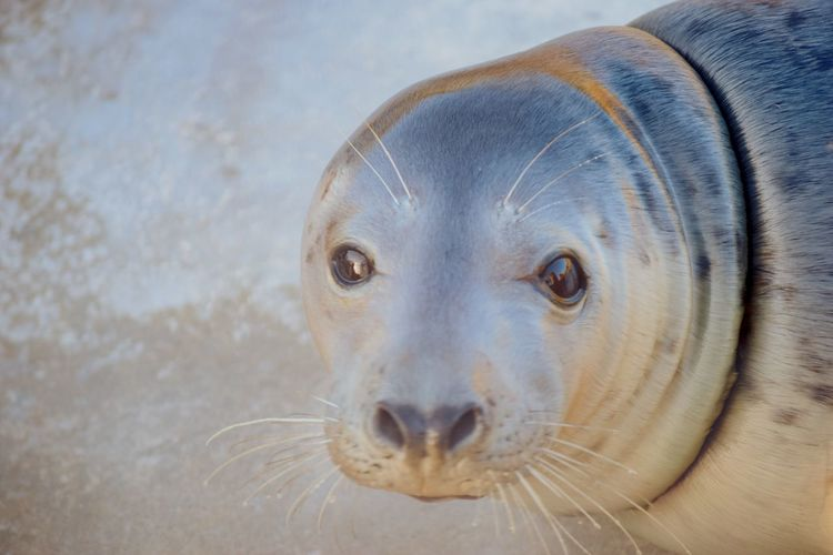 Close-up portrait of a seal