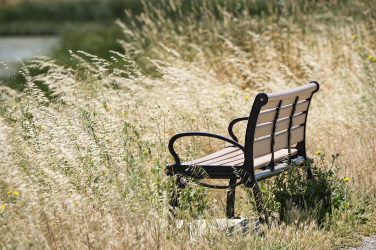 Nature bench Grass Summer Nature Bench Park Rest Natural Beautiful Nobody Outdoor Wood Plant Day Relax Background Outdoors Relaxation Furniture Wooden Rural Seat Empty Outside Season  Environment Chair Space Field Country Horizontal Water No People Sunlight Landscape Park Bench Tranquility Beauty In Nature
