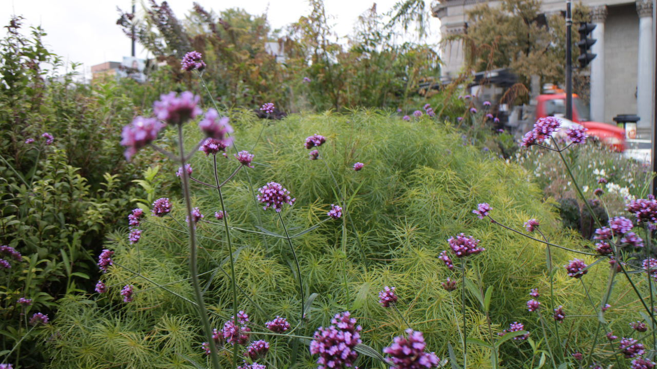 PURPLE FLOWERING PLANTS IN FIELD