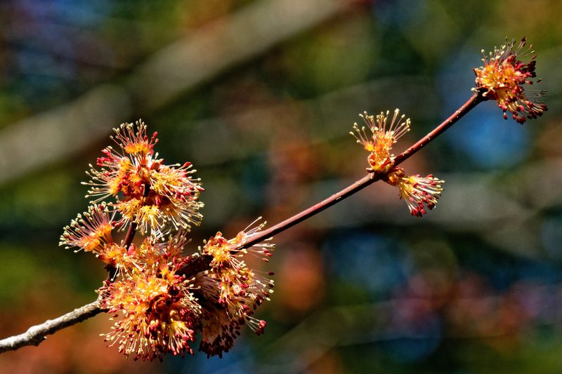 Spring Springtime Plant Focus On Foreground Beauty In Nature Growth Close-up Flower Nature