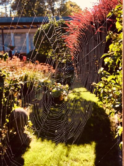 Spiderweb Web Insect Sunlight Outdoors Nature Photography Outdoors Spider Web Plant Fragility Vulnerability  Sunlight Nature No People