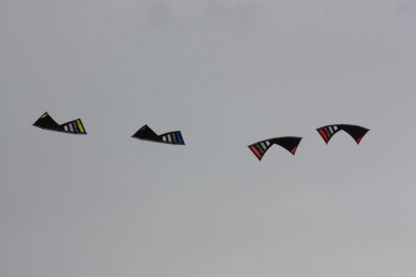 Cerf Volant Kite Flying Kite Cerfvolant
