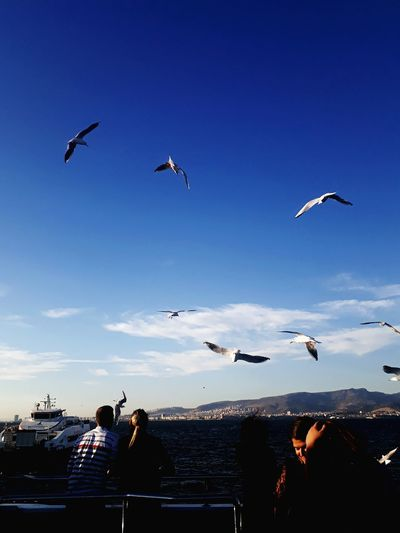 Flying Bird Flock Of Birds Seagull Spread Wings Sky City Check This Out The Week On EyeEm Taking Pictures Taking Photos Takingphotos Birds Of EyeEm  People And Places. Ferry Views Ferry Passengers Ferry Ride