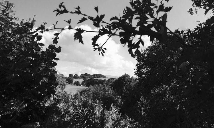 Landscape Landscape_Collection Landscape #Nature #photography Black & White Blackandwhite Blackandwhite Photography B&w Photography Wales Wales UK