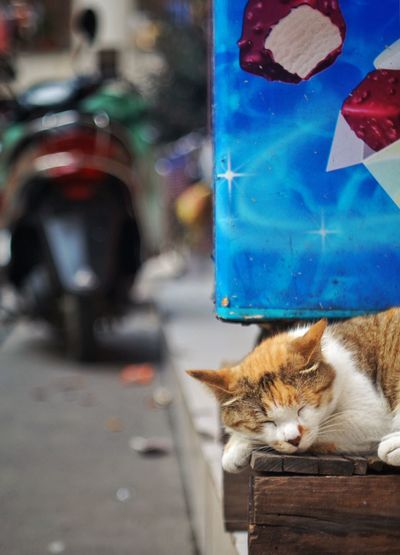 Cropped view of cat sleeping on roadside