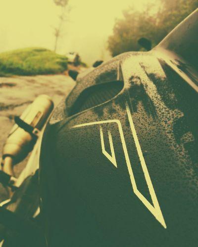 Bajaj Rain Pulsar220 Ride Ride Or Die