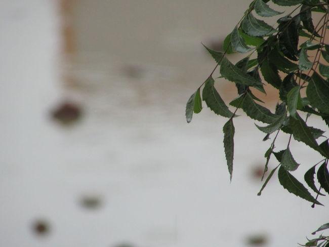 Nature Monsoon Freshness AfterShower Rain Beauty Leaf