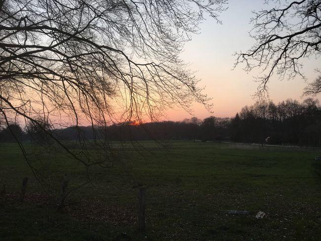 Sunset Zonsondergang Trees Bomen Landscape Landschap Gras  Grass Green Groen Showcase April