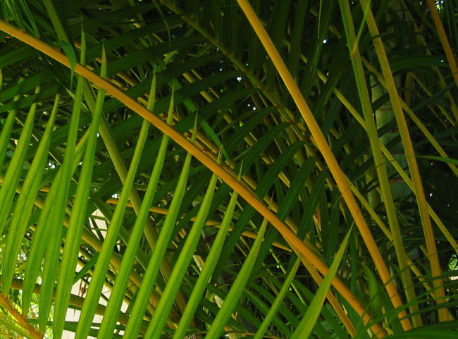 2007 Dominican Republic Dominicus Beach Close-up Day Full Frame Green Color Growth Leaf Nature No People Outdoors Plant