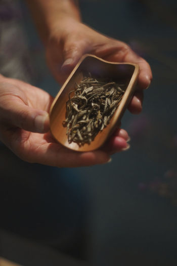 Close-up of hand holding tobacco products