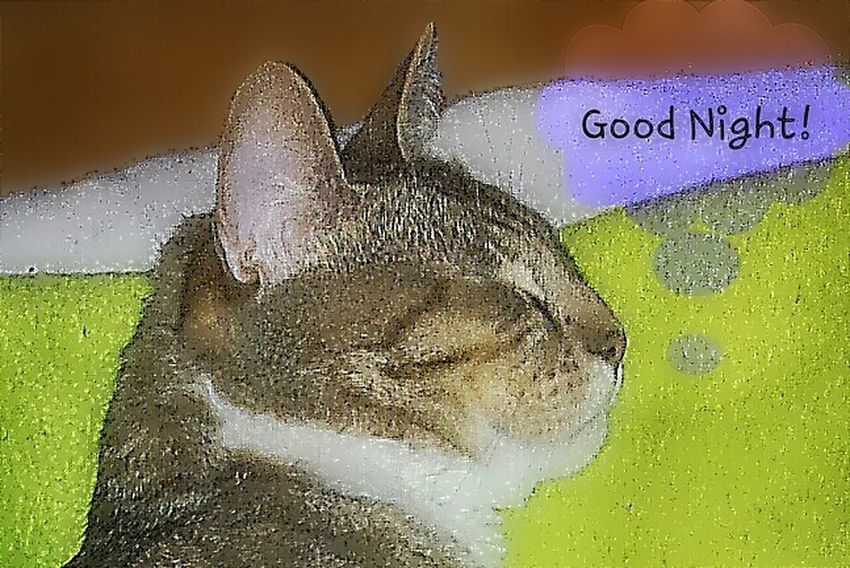 Tijger and Me wishing a Goodnight and Sweet Dreams. Edits For Friends Cats No Edit No Fun . Our Tks t♡♡.