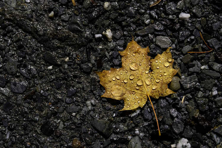 Beauty In Nature Close-up Day Fragility Leaf Nature No People Outdoors Yellow