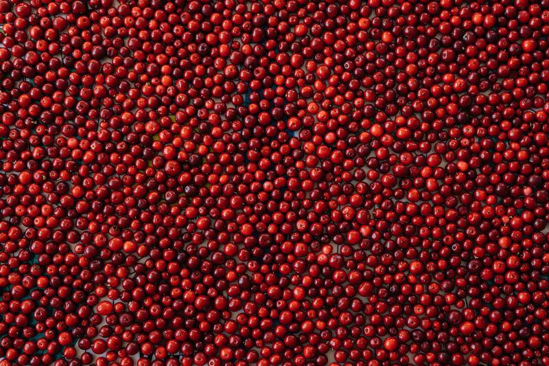 Full frame shot of cranberries