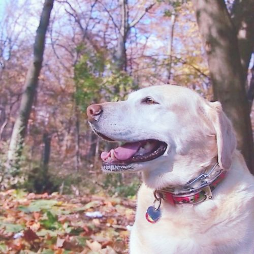 Cute Pets I Love My Dog My Dog Dogslife My Dogs Are Cooler Than Your Kids Fall Fall Colors Fall Leaves Newyork New York