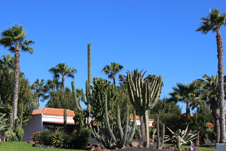 Cactus And Palm Trees Growing On Field Against Clear Sky