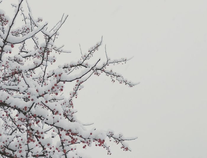 Cold Sky Low Angle View Plant Branch Tree Nature Copy Space Beauty In Nature No People Tranquility Bare Tree Winter Cold Temperature Clear Sky Growth Animal Wildlife Outdoors Day Silhouette
