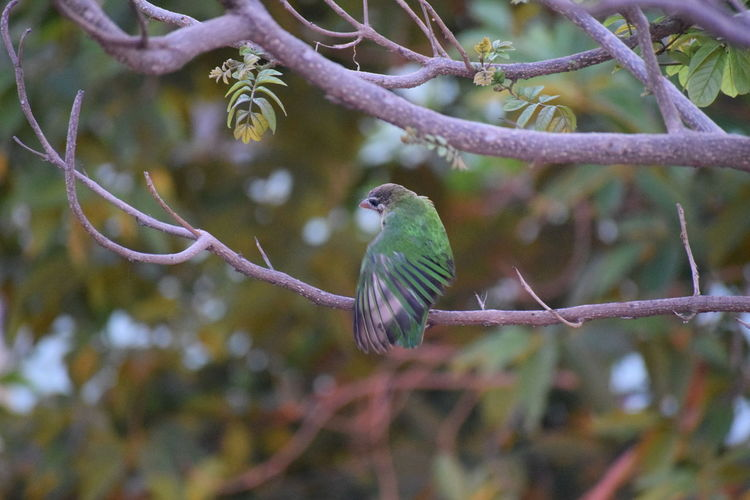 bird Bird Green Bird Ready To Fly Nikond5300 Nikon Nikonphotography Day Tree Green Green Color Bird Perching Tree Branch Close-up Tree Area