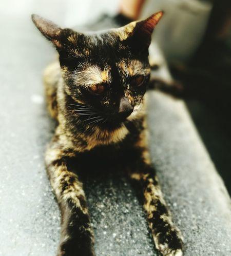Cat Cat Lovers One Animal First Eyeem Photo Central World BKK. Thailand
