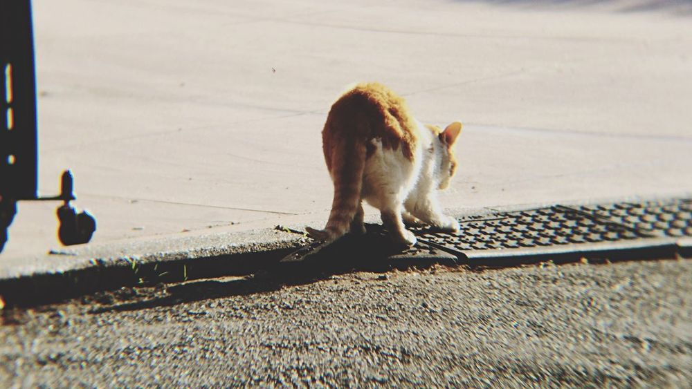 Cat Stray Cat 野良猫