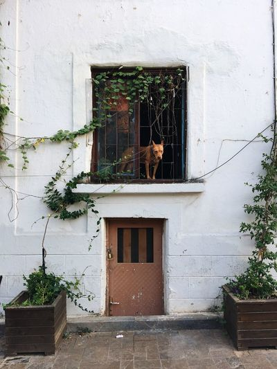 A dog looking through the window in Antalya, Turkey Antalya Beautiful Dog Looking Dogs Old Town Tourist Travel Turkey Architecture Building Exterior Built Structure Culture Dog Dog Staring Door Mammal Peaking Plant Small Door Tourism Tourist Destination Travel Turkey Turkish Window Windows