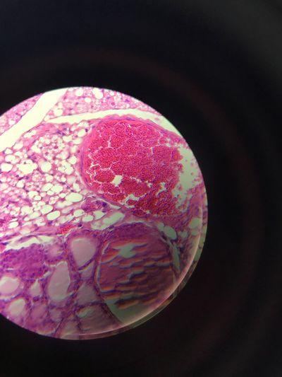 Hosteologia Laboratorio Tejidos Cartilago Beatiful