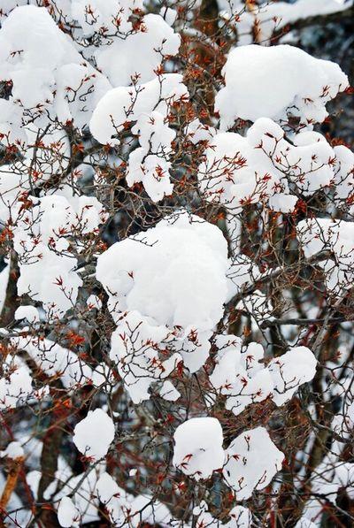 Snowlandscape Snow ❄ Snowwhite Snow Tree In Korea