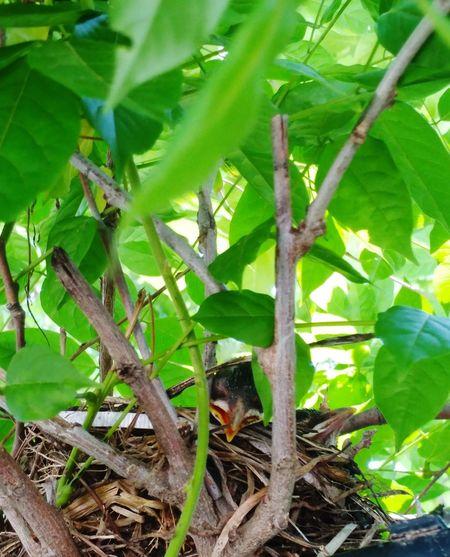 Bird Nest Baby