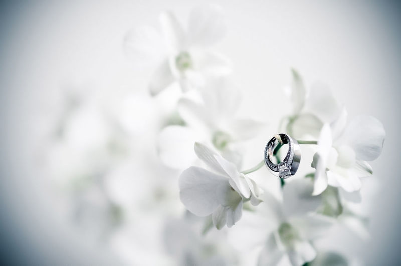 Close-up of wedding rings on flower