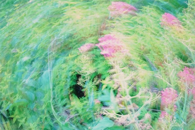 Close-up motion blur of flowers. Backgrounds Beauty In Nature Circular Blur Close-up Close-up Colorful Flower Day Full Frame Grass Green Color Growth Motion Blur Multi Colored Nature No People Outdoors Pink Color