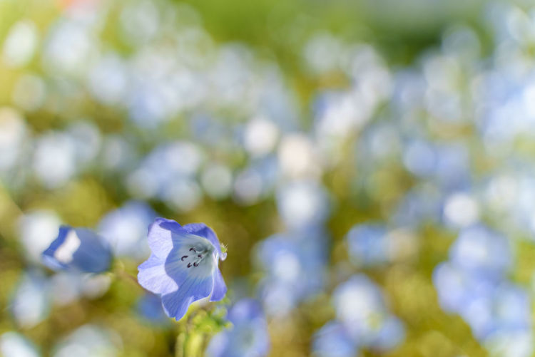 Close-up of fresh purple white flowers