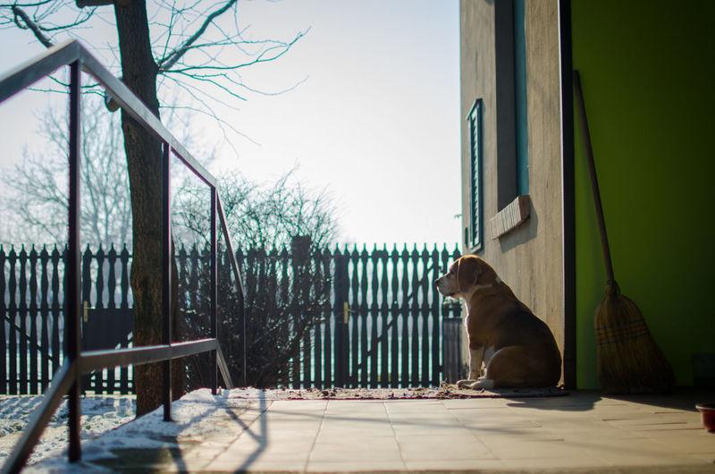Dog sitting at porch