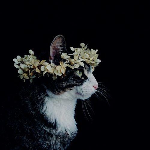 Ni a tres, ni a cuatro metros sobre el cielo, con los pies en la Tierra para no caer al suelo🐺 Cat♡ First Eyeem Photo