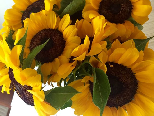 Beauty In Nature Blooming Flower Flower Head Fragility Freshness Growth In Bloom Nature Petal Plant Sunflower Yellow