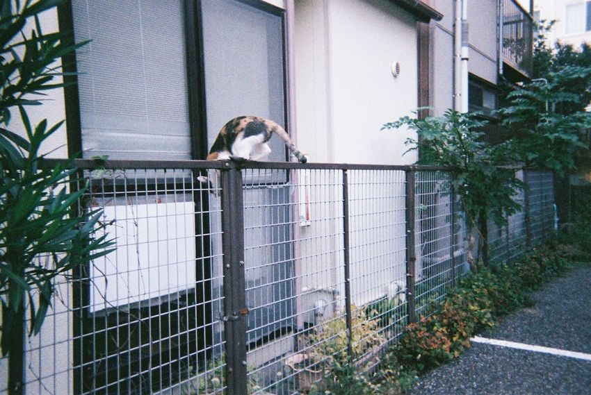 街のネコちゃん Niigata-shi Niigata Japan Film Photography Cat