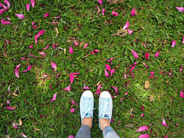 💗Pink day💗 Fall Beauty Blossom Botany Capturing Freedom Close-up Elégance Exceptional Photographs Flower Focus On Foreground Fragility Freshness Grass My Favorite Photo Legs Pattern Pieces Petal Pink Pink Color Lieblingsteil Sneakers Tadaa Community Spotted In Thailand The Tourist Travelling Travel Millennial Pink
