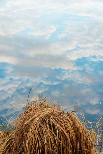 Grass Reflection Beauty In Nature Close-up Cloud - Sky Day Dry Hay Bale Nature No People Outdoors Sky Tranquility Water