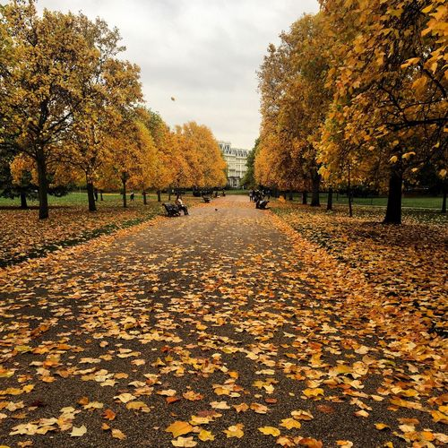 Hyde Park Tree Autumn Plant Leaf Nature Beauty In Nature Park The Way Forward Outdoors