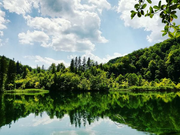 Perfect reflection Reflection Tree Water Nature No People Beauty In Nature Outdoors Plitvice Lakes National Park Landscape Lake Sky Day Green Color Freshness Plitvice National Park