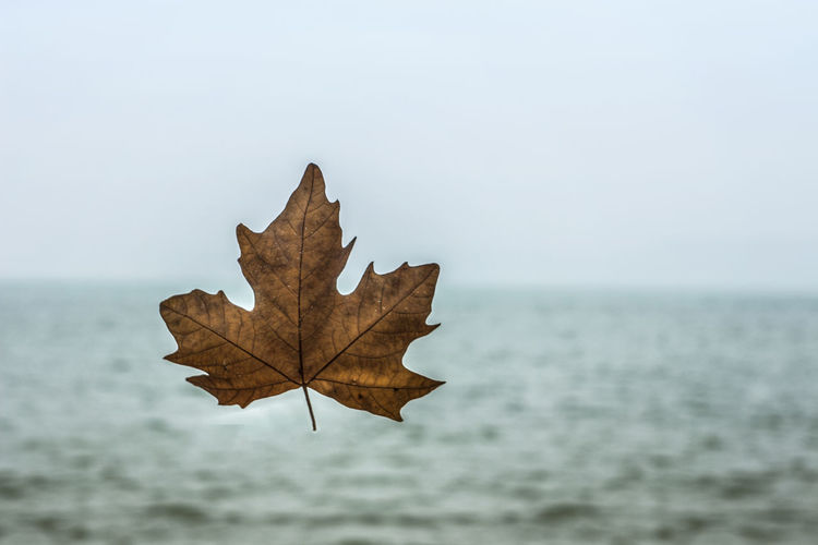 Close-up of dry maple leaf against sky