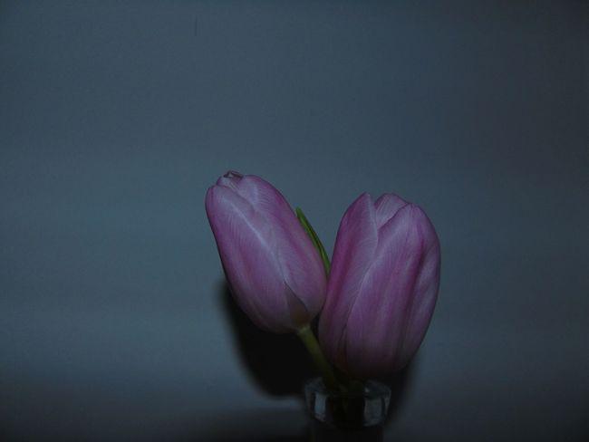 Flower Close-up Dark Pink Flash Minimal