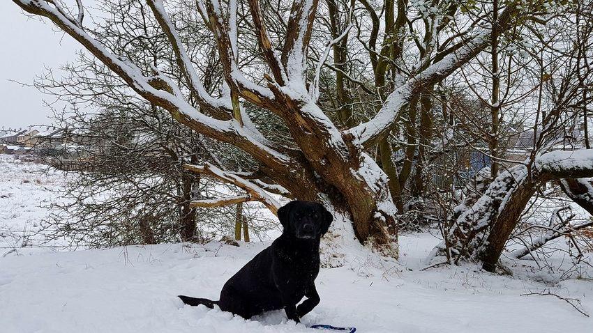 One Animal Animal Themes Nature Outdoors Day Animal Wildlife Snow