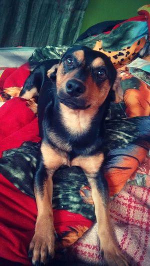 Tommy Perro Perros  Perros❤ Perrito Perros Por El Mundo Perro Time Perro❤ Perro :33 Perro Callejero Perro Animales Compañía Perrosconestilo Perrosconencanto PerrosBuenos Perroloco Mascota Mascotas Mascotas 🐶 Mascotas :) Mascotas Felices Mascotaslocas Mascotasconestilo