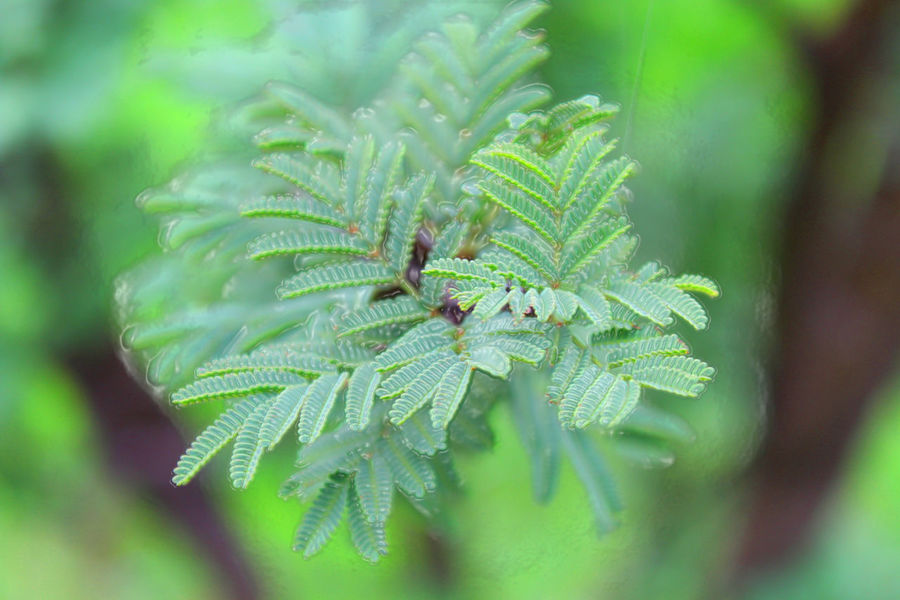Que sera de mi Beauty In Nature Botany Close-up Day Focus On Foreground Green Green Color Growth Leaf Leaves Natural Pattern Nature No People Outdoors Plant Selective Focus Stem Tranquility