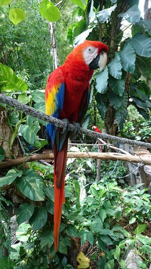 Animal Ara Macao Beauty In Nature Bird Day Nature Outdoors Parrot Scart Macaw