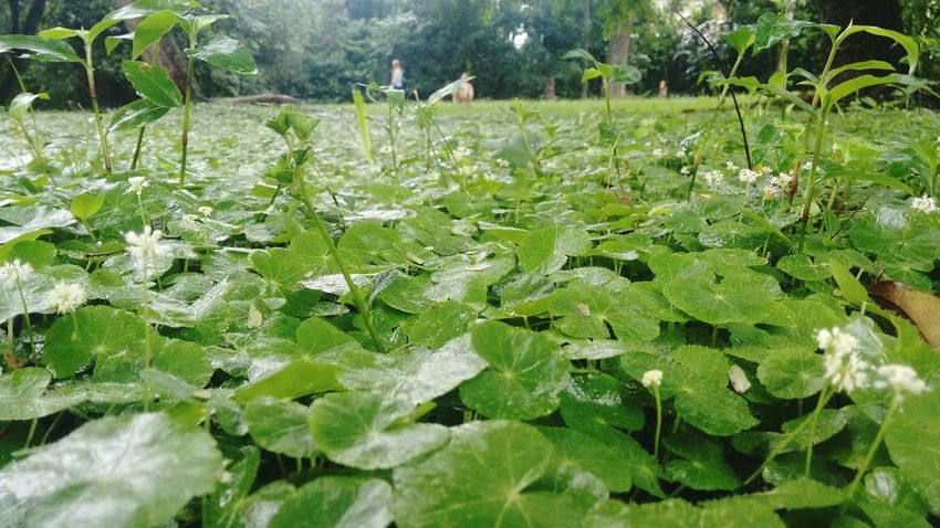 Misiones, Argentina Verde Growth Nature Green Color Outdoors Plant Leaf Beauty In Nature