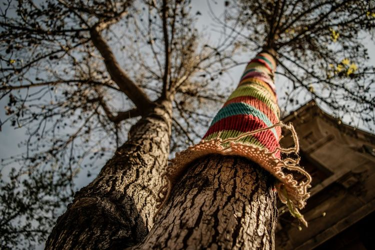Low angle view of colorful fabric on tree trunk