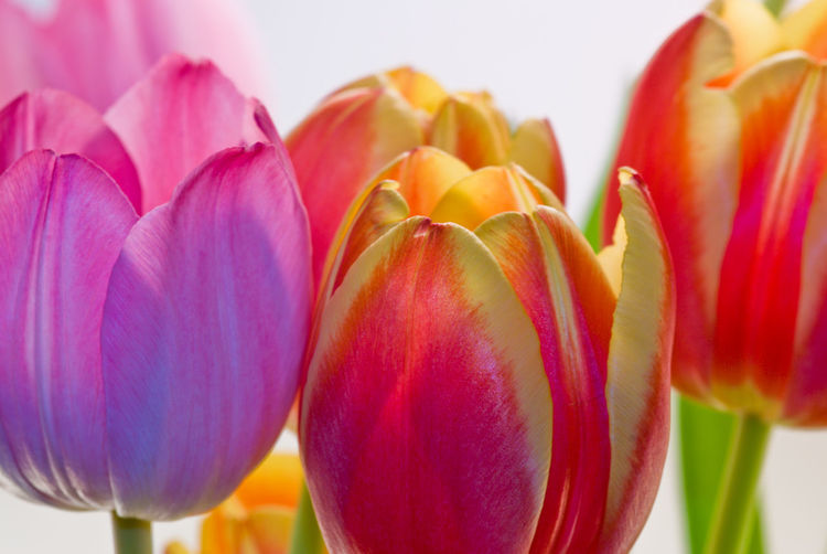 Close-Up Of Tulips Growing Outdoors