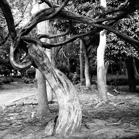 Blackandwhite Black And White Trees Black & White