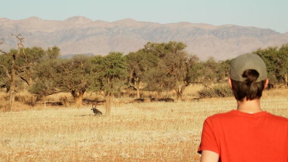 Animal And Human Namibia Trekking Animals In The Wild Namib Naukluft National Park One Animal One Person Rear View Safari Animals
