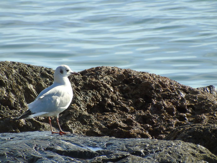 Animals In The Wild Animal Themes Animal Bird Animal Wildlife Water Vertebrate Seagull One Animal Rock Rock - Object Solid Perching Sea Day Nature No People Beach Sea Bird Italy